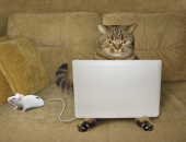 Cats Mice Laptops Sofa Funny 522017 1334x1024