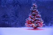 christmas tree snow light lights
